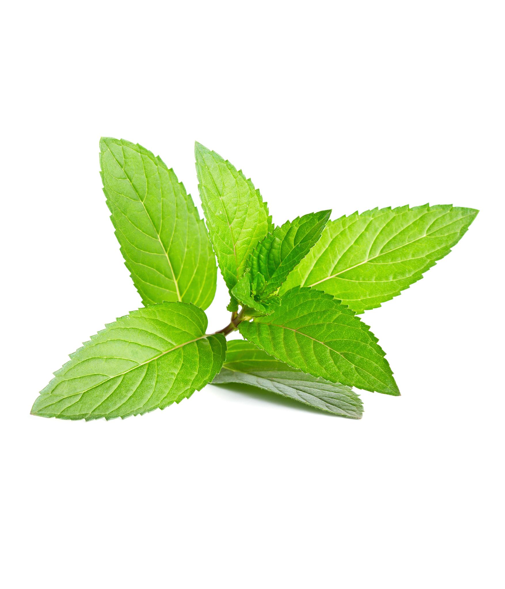 กลิ่นมิ้นท์ ( Mint Flavor )