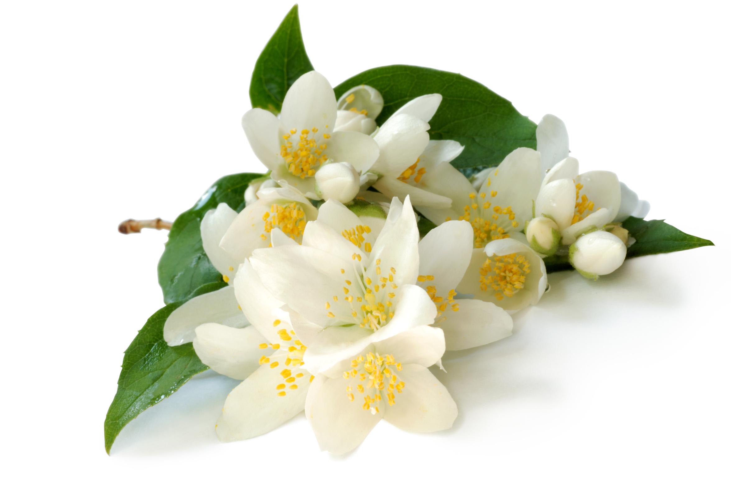 กลิ่นมะลิ ( jasmine Flavor )