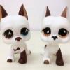 แพ็คคู่ สุนัขเกรทเดน #750,#577 (หายากมาก)