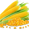 กลิ่นข้าวโพด ( Corn Flavor )