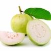 กลิ่นฝรั่ง ( Guava Flavor )