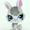 กระต่าย สีเทา ตาสีฟ้า