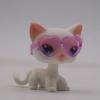 แมว Short Hair สีเทา ตาสีฟ้า #64 พร้อมแว่นตา