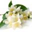 กลิ่นมะลิ ( jasmine Flavor ) thumbnail 1