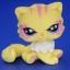แมวเปอเซีย สีเหลือง #723A thumbnail 1